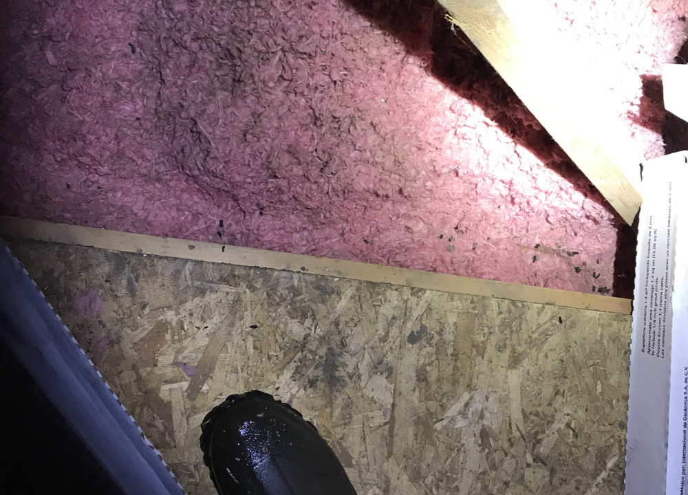 Chewed up insulation, rat droppings and the signs of a rat trail in an attic.