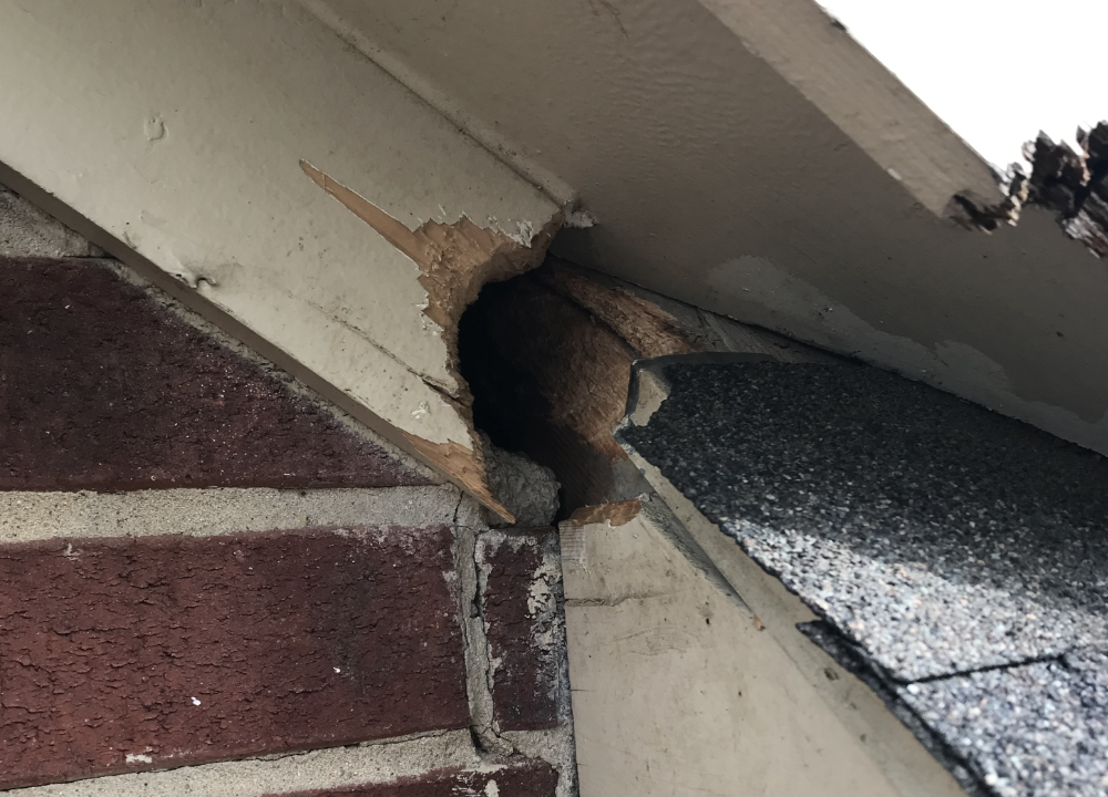 A hole chewed by squirrels in a roof's wooden mouldings.