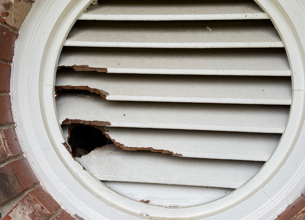 A hold chewed through a gable vent by squirrels.